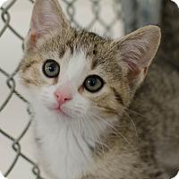 Adopt A Pet :: Mylie - Greenwood, SC