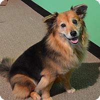 Adopt A Pet :: Revan - LaGrange, KY