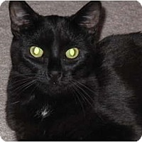 Adopt A Pet :: Bobbie - Port Republic, MD