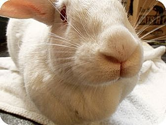Other/Unknown Mix for adoption in Silver Lake, Wisconsin - Cuddlebun