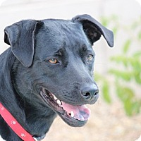 Adopt A Pet :: Teegan - Higley, AZ