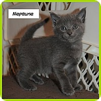 Adopt A Pet :: Neptune - Miami, FL