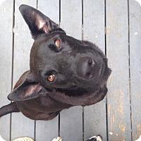 Adopt A Pet :: Jet - Somers, CT