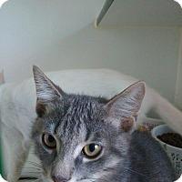 Adopt A Pet :: Chip - Hamilton, ON
