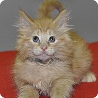 Adopt A Pet :: Pumpkin - Medina, OH
