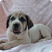 Adopt A Pet :: Sally - Huntsville, AL