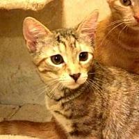 Adopt A Pet :: AA-Farren - Tyler, TX