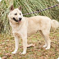 Adopt A Pet :: Sugar - Daleville, AL