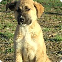 Adopt A Pet :: Blossom - PRINCETON, KY