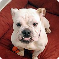 Adopt A Pet :: Harlow - Odessa, FL