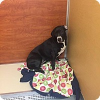 Adopt A Pet :: Karly - St. Charles, MO