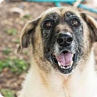 Adopt A Pet :: Ana - Key Biscayne, FL