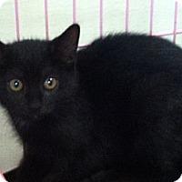 Adopt A Pet :: Maisy - Island Park, NY