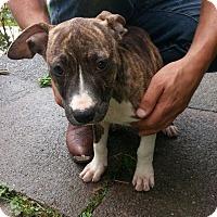 Adopt A Pet :: Cami - Elderton, PA