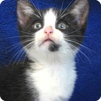 Adopt A Pet :: Oreo - Davis, CA