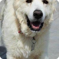 Adopt A Pet :: Brodie - Kyle, TX