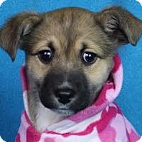 Adopt A Pet :: Joss - Minneapolis, MN