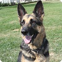 Adopt A Pet :: FREYA - Winnipeg, MB
