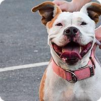 Adopt A Pet :: Sasha - Meridian, ID