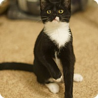 Adopt A Pet :: Jet - Stafford, VA