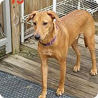 Collie Mix Dog for adoption in Nesbit, Mississippi - TJ