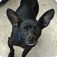Adopt A Pet :: Jerry - San Marcos, CA