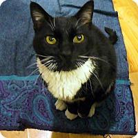 Adopt A Pet :: Sir Oreo DeFuzzy - Boise, ID