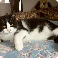 Adopt A Pet :: JACKSON - Medford, WI