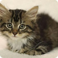 Adopt A Pet :: Layla W - Raleigh, NC