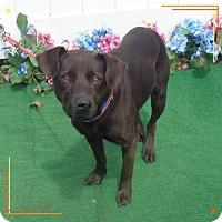Adopt A Pet :: FARGO - Marietta, GA