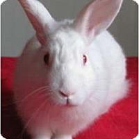 Adopt A Pet :: Klondike - Williston, FL