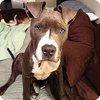 Adopt A Pet :: Sky - Seattle, WA