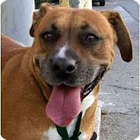 Adopt A Pet :: Jewel - Canoga Park, CA