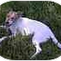 Adopt A Pet :: Ramona in Houston - Houston, TX