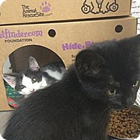 Adopt A Pet :: Batman - Winter Haven, FL