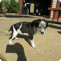 Adopt A Pet :: Allan - South Jersey, NJ