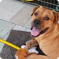 Adopt A Pet :: Claus-Courtesy Listing - Scottsdale, AZ