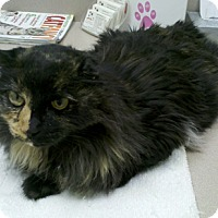 Adopt A Pet :: Smudge - Laguna Woods, CA