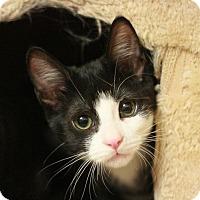 Adopt A Pet :: Flossy - Canoga Park, CA