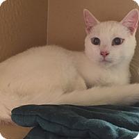 Adopt A Pet :: Micah - Morganton, NC