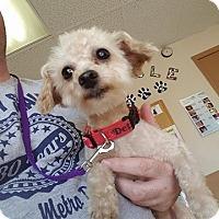 Adopt A Pet :: Kai - Troy, MI