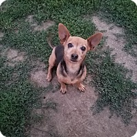 Adopt A Pet :: TRIXIE - New Windsor, NY