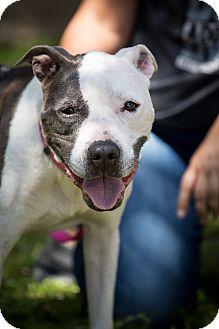 Terrier (Unknown Type, Medium) Mix Dog for adoption in Orlando, Florida - Nina