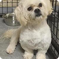 Adopt A Pet :: Casey - Valparaiso, IN