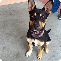 Adopt A Pet :: Layla - Tracy, CA