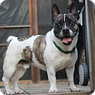 Adopt A Pet :: Pigglesworth