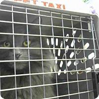 Adopt A Pet :: LUNA - Louisville, KY