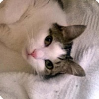 Adopt A Pet :: SKIPPER - Terre Haute, IN