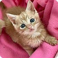 Adopt A Pet :: Sunbeam - Duluth, GA
