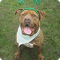 Adopt A Pet :: Manny - Crescent City, CA